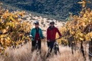 Bike The Wineries in Winter